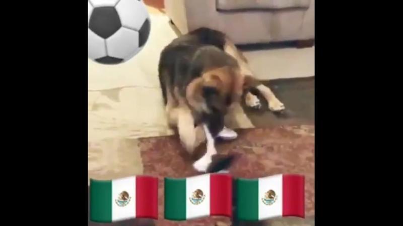 Германия -Мексика (GER -MEX)