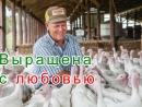 цыпы))