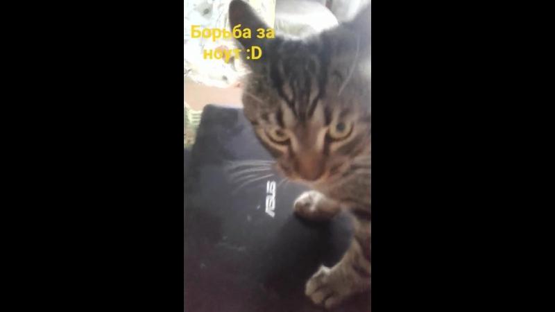 Олькин кот 3.0 (Борьба за ноут)