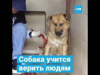 Собака учится верить людям