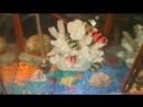Обзор на мой _Замок и Гроты для сомиков анцыструсов!_ И всех рыбок. - YouTube-1.mp4