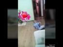 беби тайм и степа)