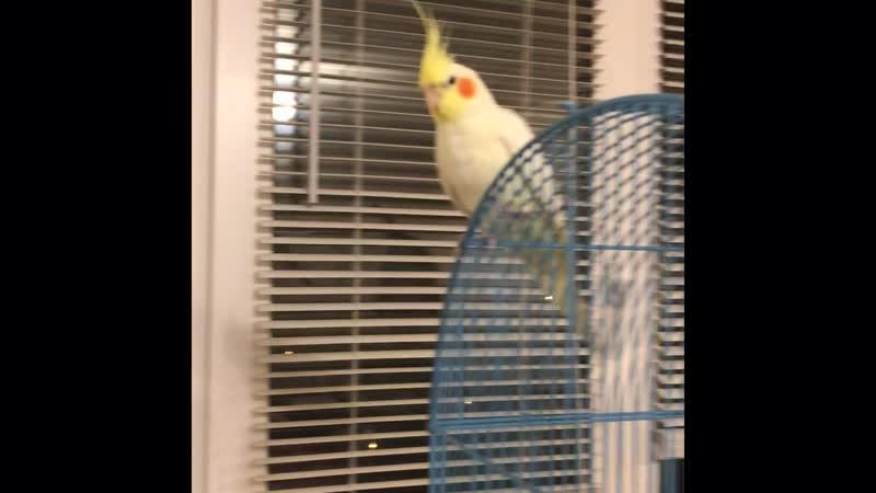 Ни какой личной жизни...., у попугая