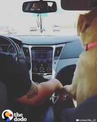 """? Животные со всего мира on Instagram: """"Придумайте свое название для видео?⠀ ... и обязательно читайте другие?⠀ Наш проект✅@cats_vines⠀ ❤️Если ..."""