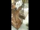 Китай Породистые собаки идут на мясо