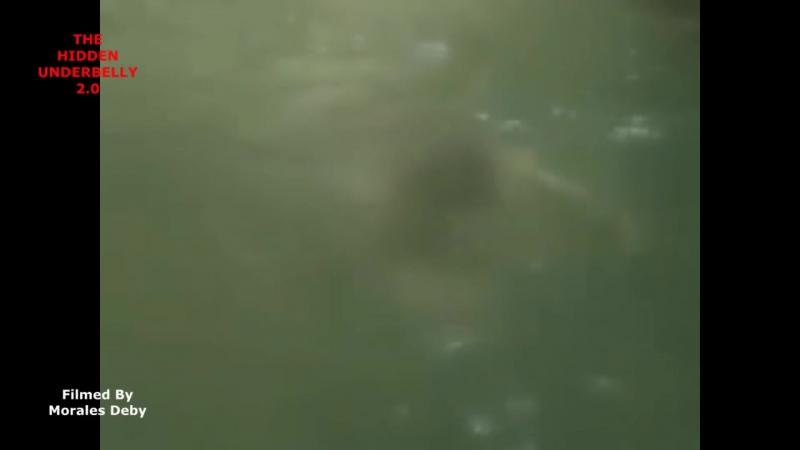 Странное существо преследует людей на лодке
