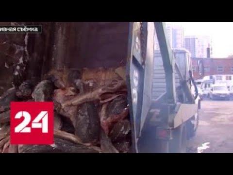 Банда из Хабаровская возила в Москву контрабандную рыбу под видом мусора - Россия 24