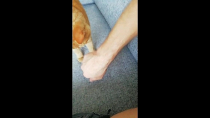 Обычные будни супер кота