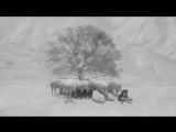 «24 кадра» 2017 Режиссер Аббас Киаростами  экспериментальный, драма