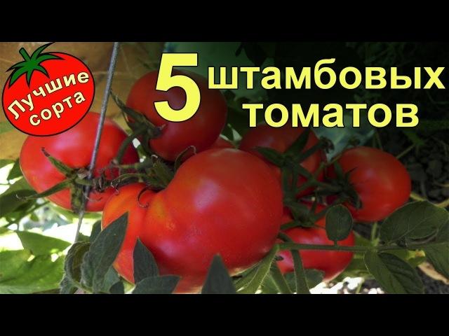 Штамбовые урожайные томаты лучшие сорта томатов