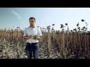 Гибриды подсолнечника из года в год стабильный урожай!