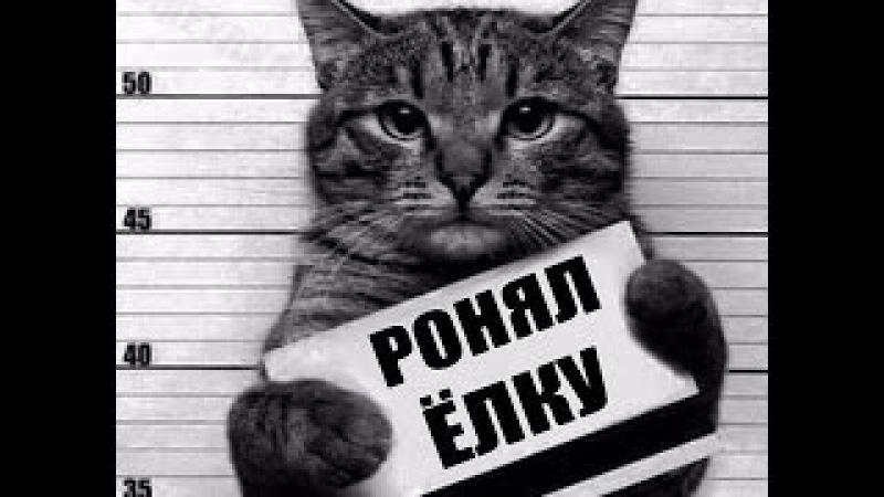 Приколы с котами и кошками — Смешные коты и кошки 2017 🐈 КОТЫ ПРИКОЛЫ 2017 1 котики ...