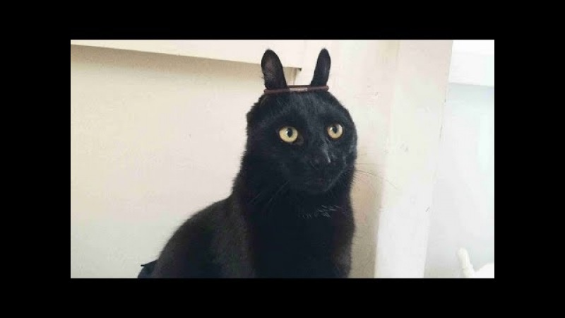 ARE you TOUGH enough to STAY SERIOUS - Funny CAT compilation