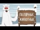 ПОЛЯРНЫЕ ЖИВОТНЫЕ! Развивающие мультики на русском для самых маленьких 2017 Учим ...