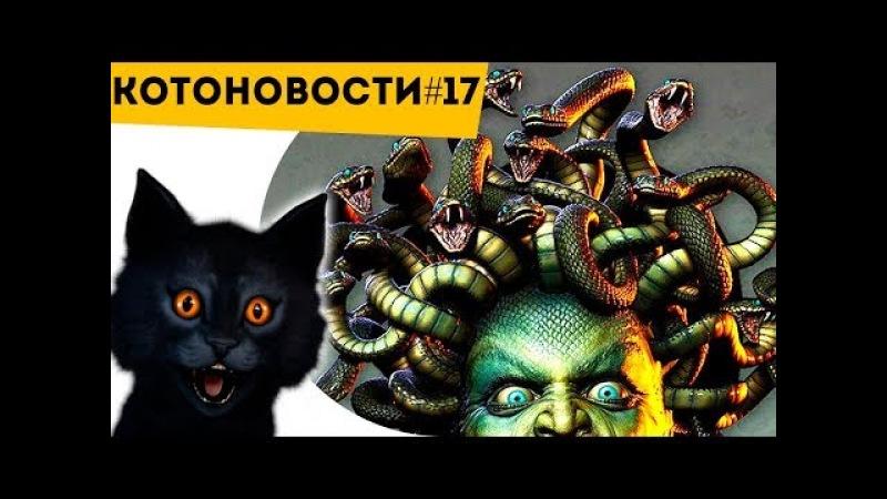 Откуда У Медузы Горгоны Змеи | Ученые Расшифровали Язык Пчел! | Котоновости 17