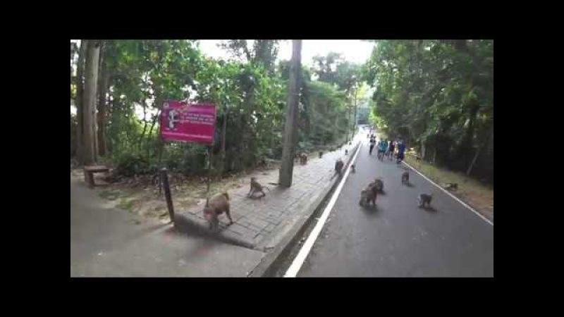 Отрывок из Тайской бригады