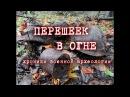 Погибшие бойцы в дороге коттеджного поселка/Раскопки Второй мировой войны