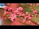 Top 10 Loại Hoa Thường Cắm Trong Gia Đình Miền Bắc Dịp Tết - KAPA Channel