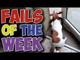 Best Fails of the Week - Some Dogs are Silly (July #42017)  LotOfLaughsTv
