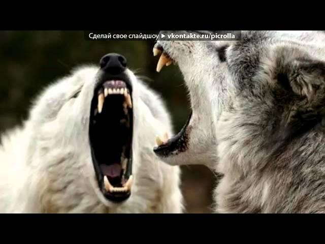 Kurai sama волк-одиночка