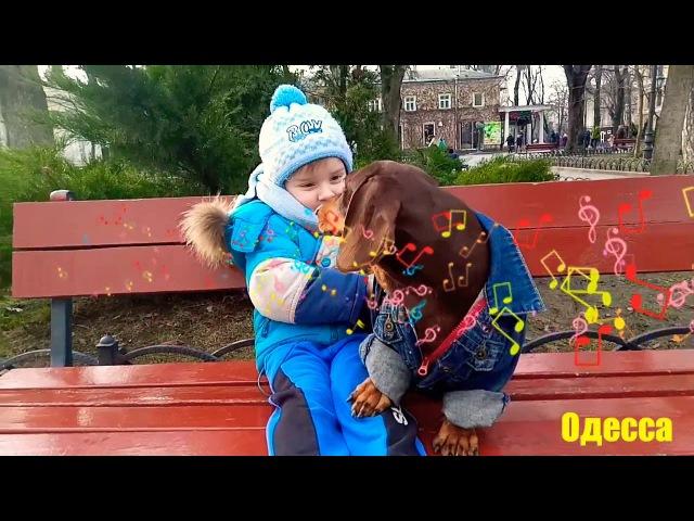 ВЛОГ Прогулка с Барни Хороший день Риша познакомился с Barni Самая известная Одесская такса🏩🏩🏩