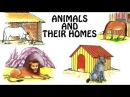 Animals And Their Homes | Animal Shelter For Kids | Fun Learn | Preschool Learning Videos For Kids