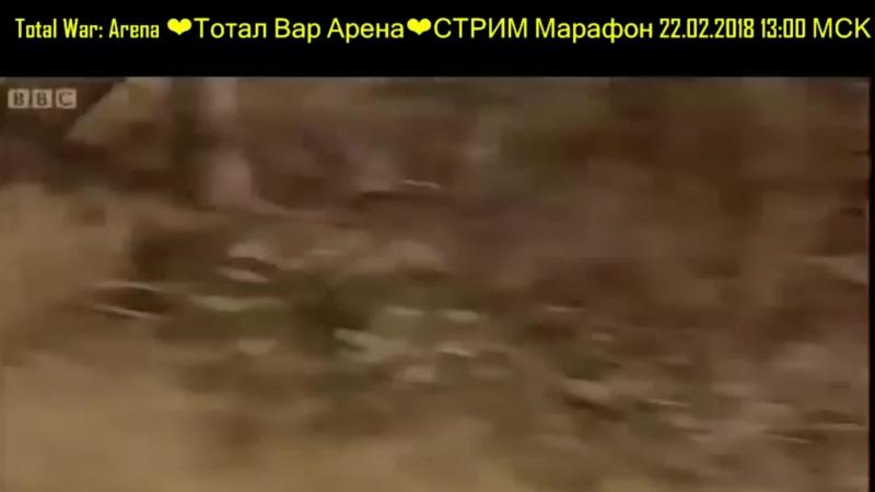 Total War: Arena ❤ Тотал Вар Арена ❤39 ОБТ Карфаген Ганнибал Гасдрубал Слоны и гоплиты Обзор патча