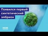 Появился первый синтетический эмбрион