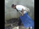 Наглая кобра и Босс