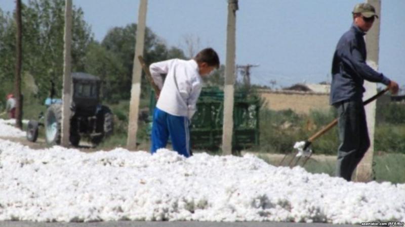 Türkmenistanyň Mejlisi 'Pagtaçylyk hakynda' kanun taslamasyny kabul etdi
