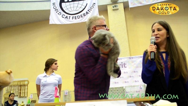 WCF ринг взрослых кошек, Харьков, Международная выставка кошек и котов, 17 сентября, 2016, часть 3