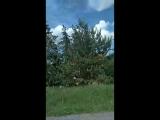 Андрій Зрум - Live
