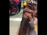 Долгожданные встречи собак со своими хозяевами