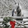 Фотосессии с лошадьми / Фотосессия / Челябинск