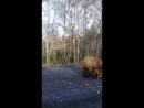 медведь в Норильске