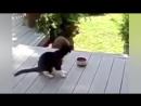 СМЕШНОЕ ВИДЕО ПРО КОШЕК 2016- FUNNY VIDEOS ABOUT CATS 2016.mp4