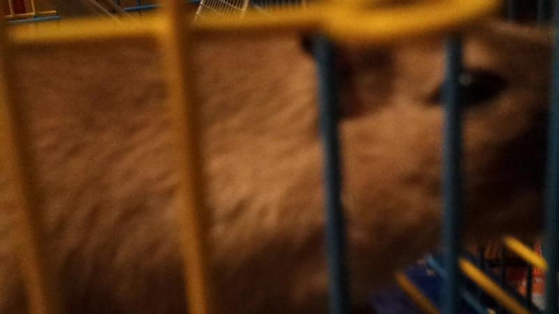 Наша Мышка-Наружка (псевдоним - Прослушка)