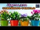 10 растений которые должны быть у Вас дома Комнатные цветы для любви и счастья