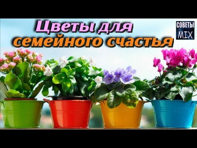 10 растений, которые должны быть у Вас дома Комнатные цветы для любви и счастья