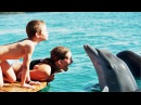 The Eilat Dolphin Reef