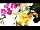 How to make Orchids paper flowers Cách làm hoa lan hồ điệp từ giấy nhún