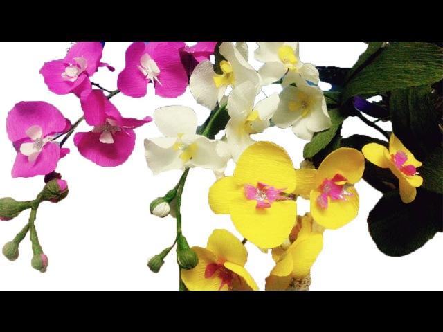 How to make Orchids paper flowers – Cách làm hoa lan hồ điệp từ giấy nhún