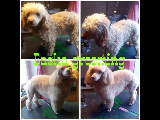Baska_grooming video