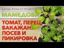 Дачные уроки профессора Мамедова: томат, перец, баклажан. Посев и пикировка