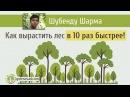 Шубенду Шарма Как вырастить лес в 10 раз быстрее.