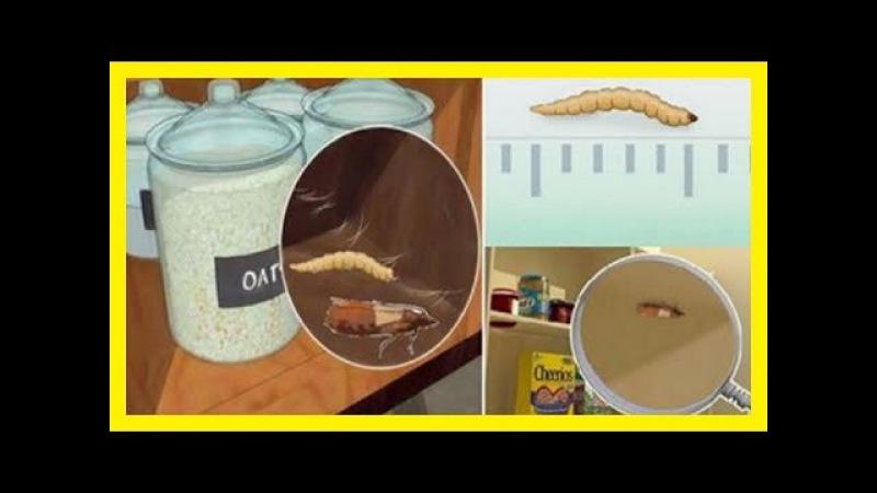 Cómo acabar con las polillas en los armarios de la ropa