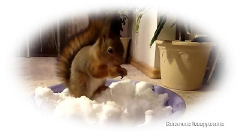 Весело, с белочкой, встретим Новый год! New year at a squirrel Noble.