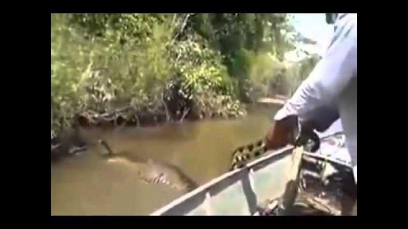 Anaconda - Cobra gigante encontrada durante pescaria