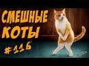 Смешные Кошки и Коты Приколы с котами До Слёз 2018 Funny Cats