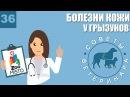 Болезни кожи у грызунов Советы ветеринара